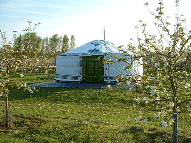 Holiday Yurts - Apple Wood Glamping